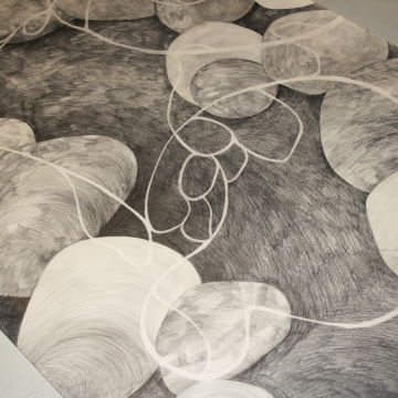 Hyphas. Pencil. 1 x 9 metres and 1 x 7 metres. 2018