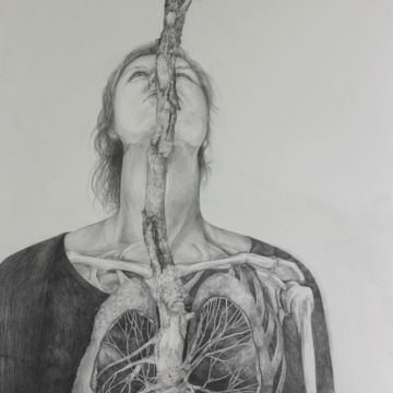 Lungs. Pencil. 59 x 84 cm. 2020